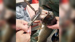 Ψάρεψαν ένα μεγάλο παράξενο ψάρι και μόλις είδαν τι είχε στο στόμα του και βρέθηκαν προ εκπλήξεως