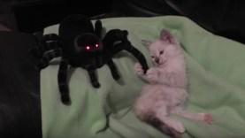 Kitten-Vs-Spider-Cuteness2