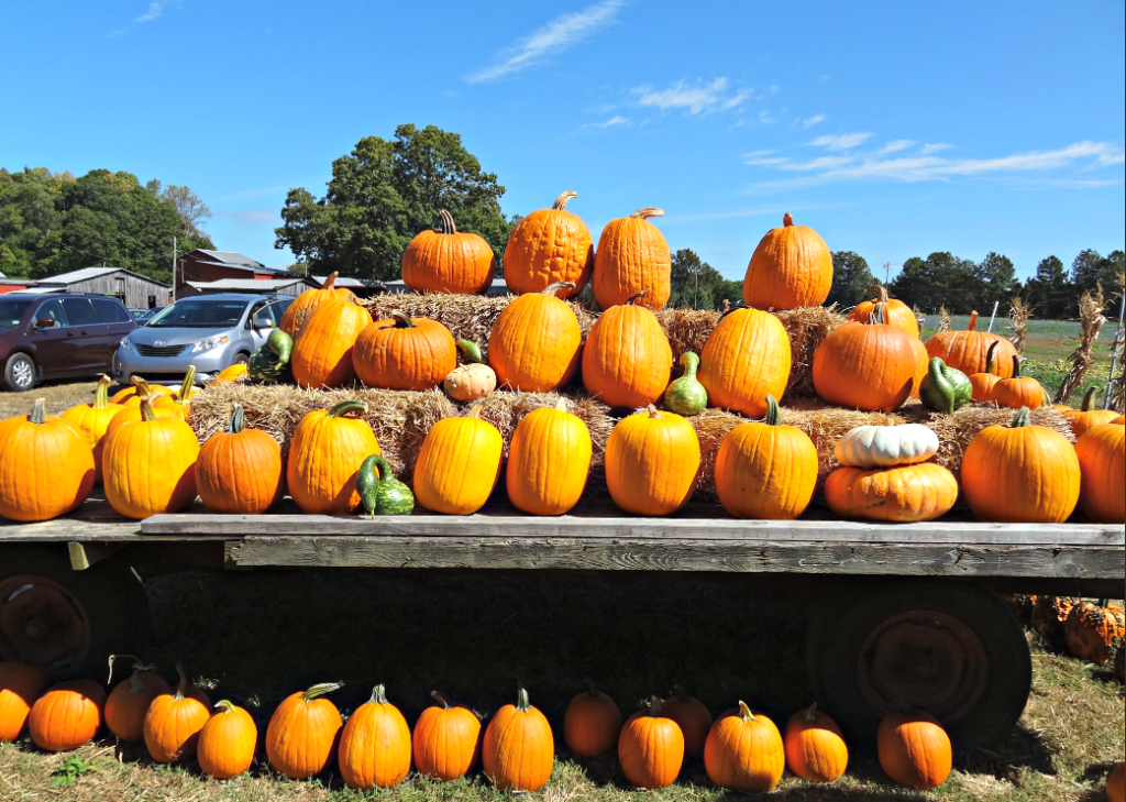 Tips to Make the Most of Your Trip to the Pumpkin Patch #pumpkin #pumpkinpatch #pumpkinfarm #familyfun #toddleractivities #pagefarms #visitNC