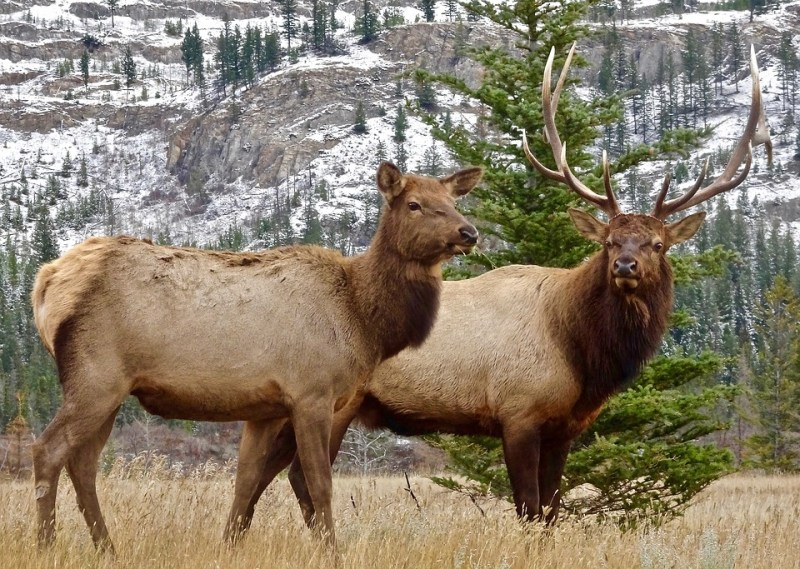 The Best Elk Hunting Rifle Cartridges – Live Wild Eat Wild
