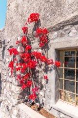 emporio - street-flowers-red