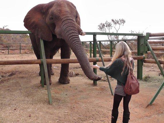 Elephant-feeling-hartbeespoort