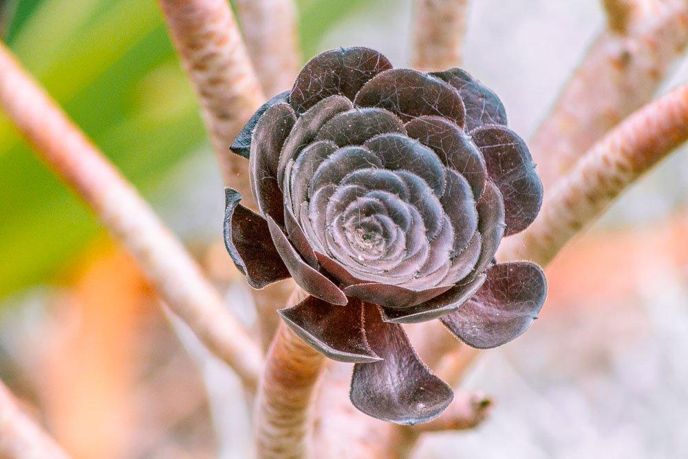 wellington-botanic-gardens-2