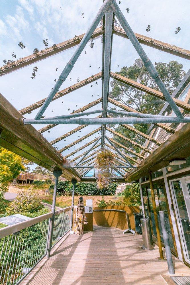 wellington-botanic-gardens-tree-house-5