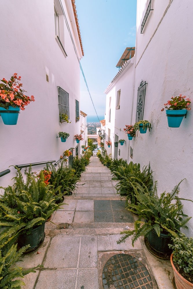 White houses and plants in Mijas