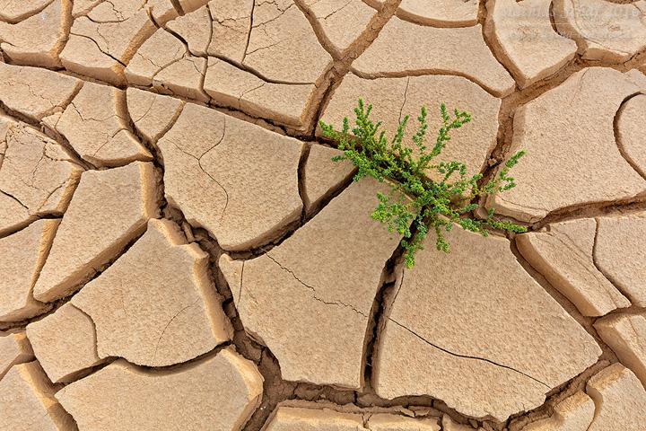 Landschaft_Israel_5DSR_21577