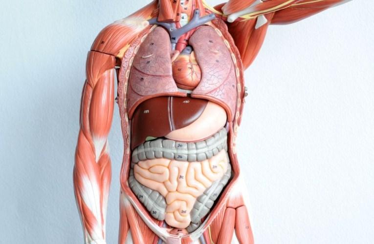 Kroppen vår utvendig  أعضاء جسم الانسان الخارجي