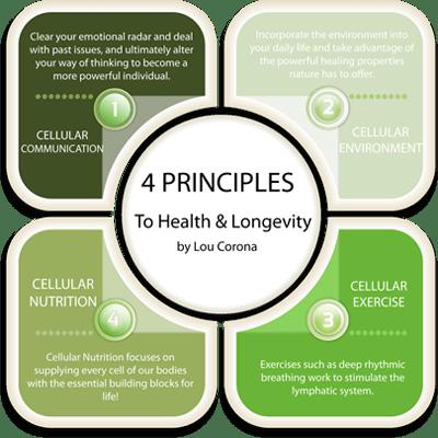 new-4-principles