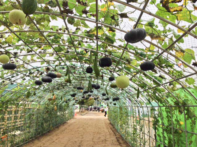 Entrance to AsiO Gusto under a canopy of squash