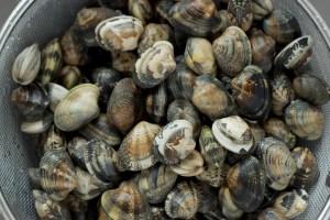 Vongole verace clams