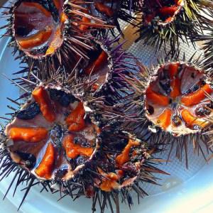 Sea urchin by Ametxa