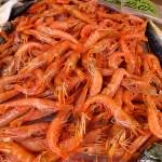 Red Mediterranean prawns