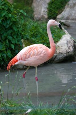 Flamingos at Parco Natura Viva