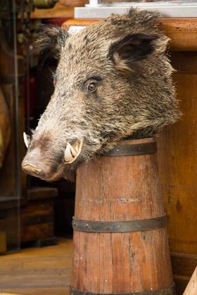 WIld boar heads