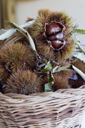 meimanrensheng.com chestnuts-1357