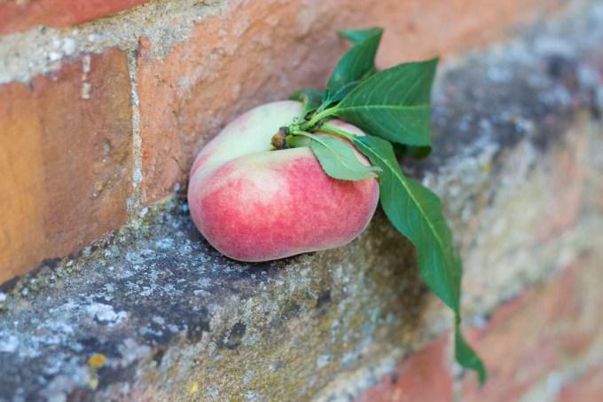 Doughnut peach