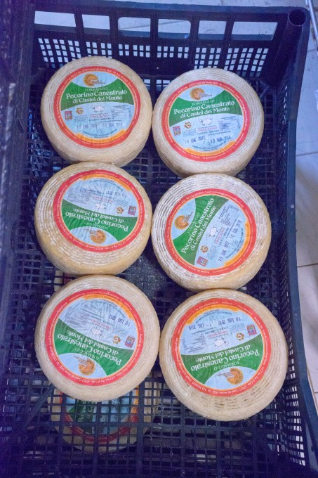 Finally the cheese is ready to be labelled Canestrato di Castel del Monte