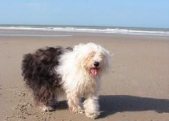 Met de hond op het strand