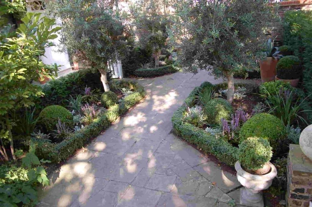 Olives Amp Box Living Colour Gardens