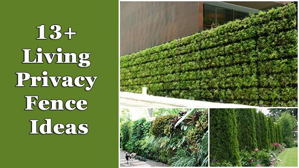 13 Living Privacy Fences Ideas on Decorations For Privacy Fence id=18531