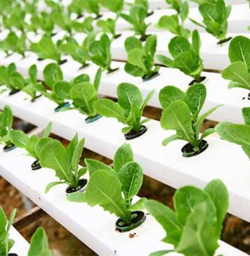 Beginner's Guide to Hydroponic Gardening