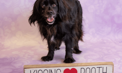 Gwinnett Pet Adoption