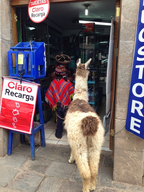 Llamas EVERYWHERE!