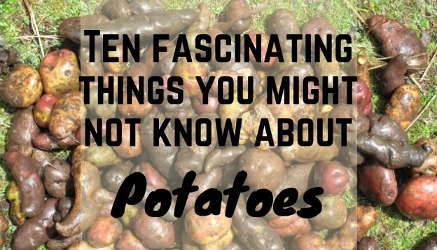 10 Fascinating Things That You Might Not Know About Potatoes