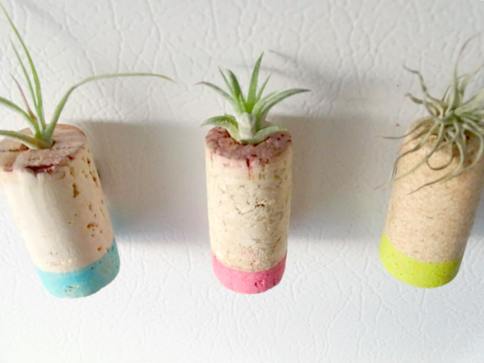 DIY Upcycled Cork Air Plant Magnets