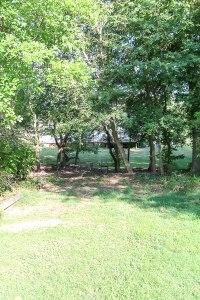 empty backyard grass