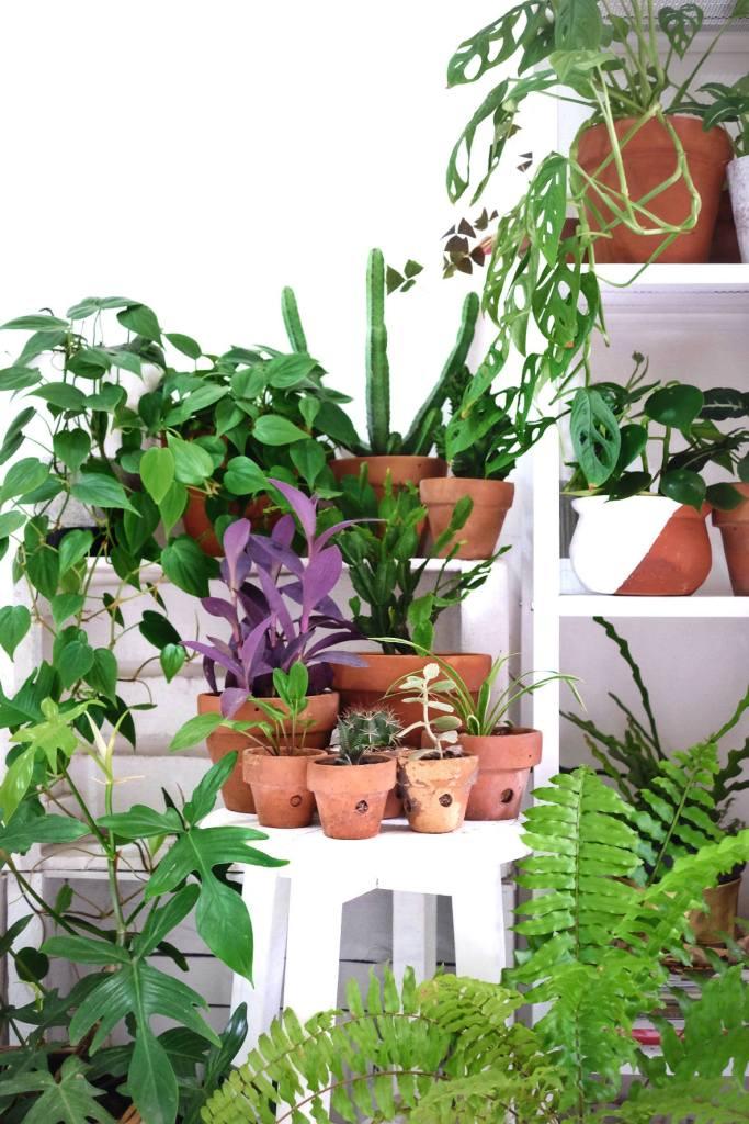 tips-merawat-tanaman-rangga-kusuma-living-loving-3