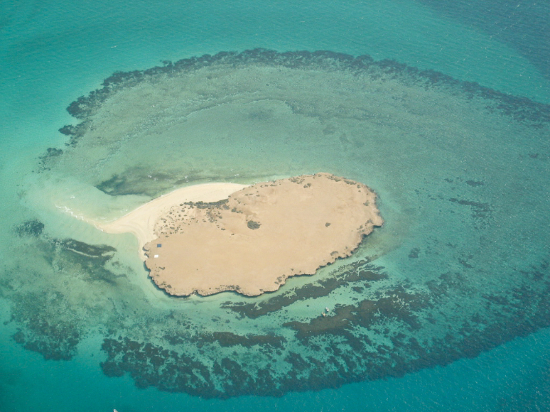 Farasan Islands Album Living Oceans Foundationliving