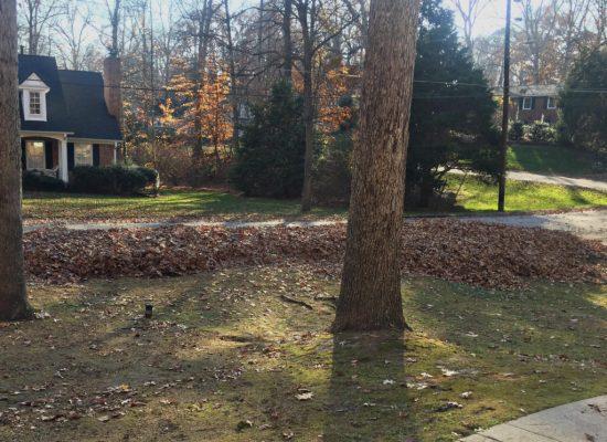 Living on Saltwater  - Leaves