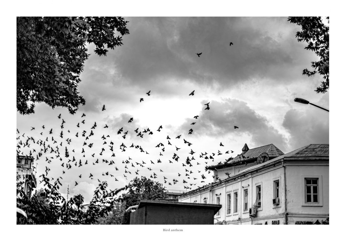 birds, city, grey skies