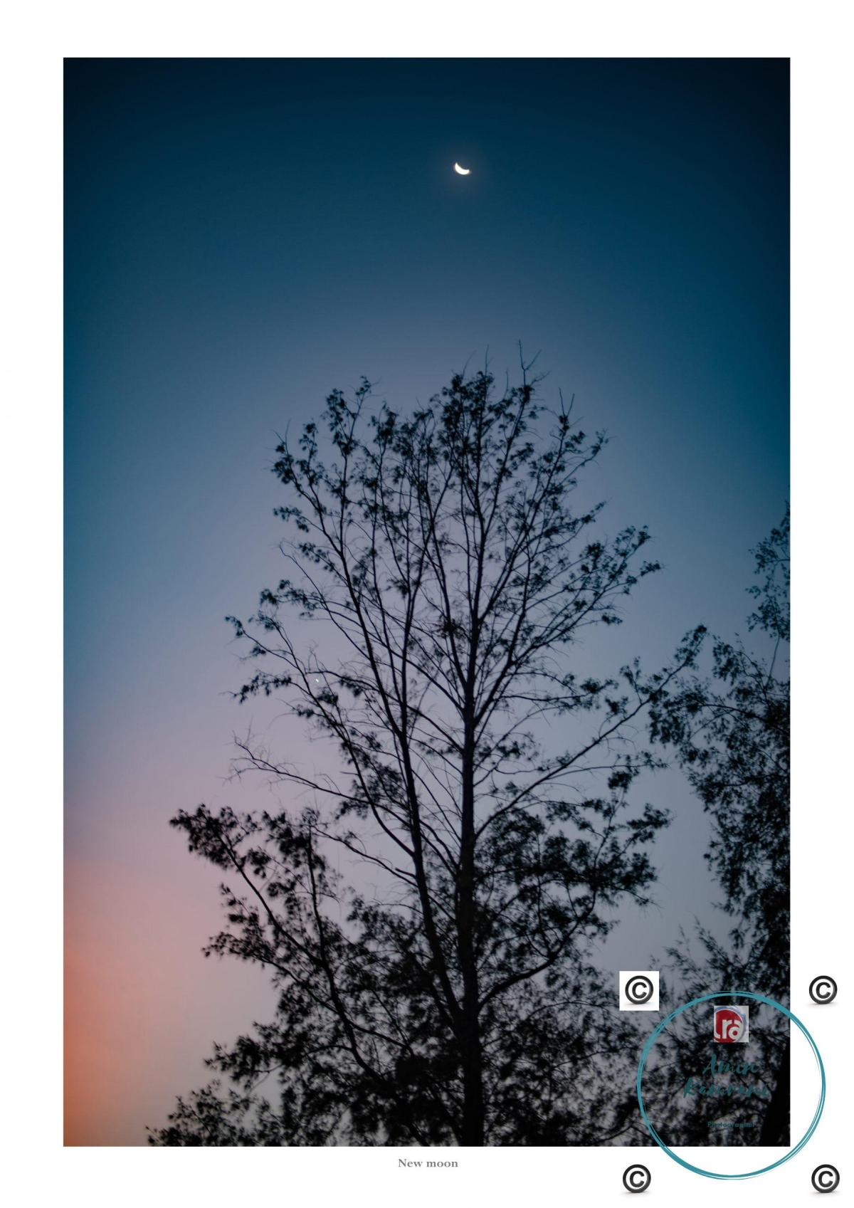 landscape, moon, dusk, tree