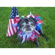 Snoqualmie Valley Pets 101: How to Keep Pets Safe this 4th of July