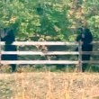 Video | Mom, daughter capture Snoqualmie 'Brother Bears' up close play time