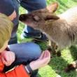Bringing Australia to the Valley: Fall City Wallaby Ranch, king of kangaroos, wallabies