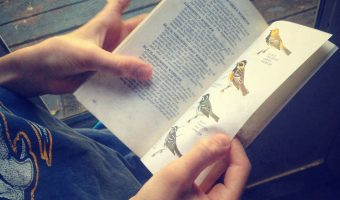 Maintaining (or reigniting) a Child's Love For Learning