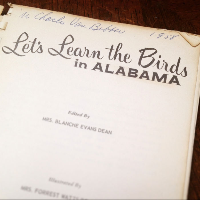 Let's Learn the Birds in Alabama