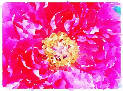 Peonies photo transformed to watercolor