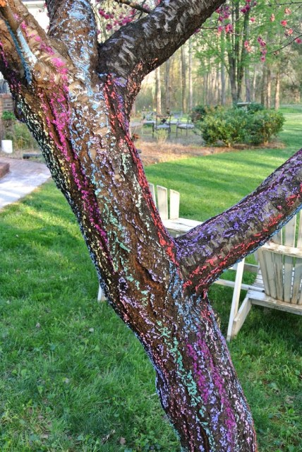 Chalk applied to a tree trunk beautiful in the sunlight