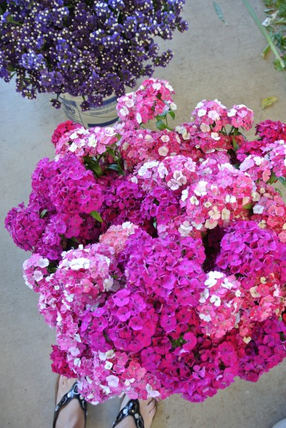 Pink flowers -Farmers Market with  Living With Color Designs