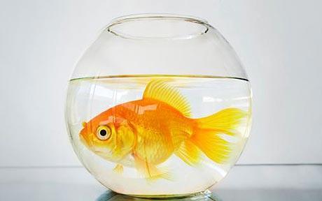 Purifying Speech and Fish Tefilin