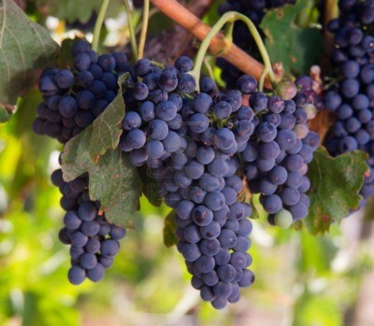 Wine and Secrets