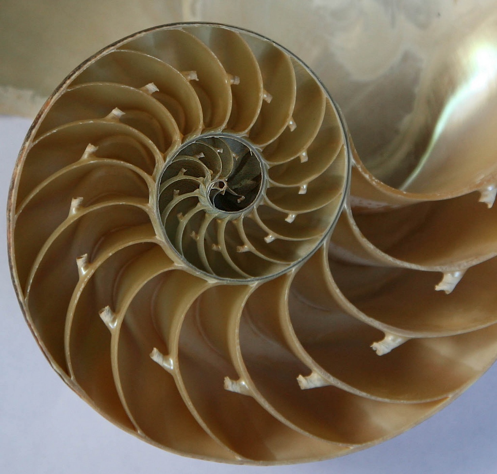 Fibonacci Sequences and God