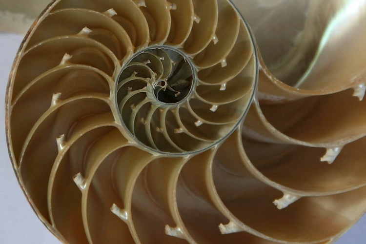 Fibonacci Shell