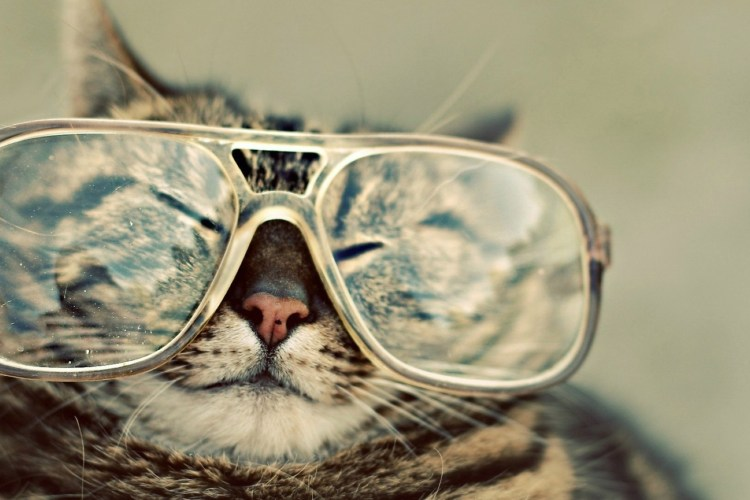 Crazy Funny Cat Pictures HD Wallpaper