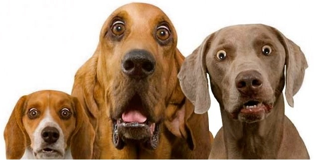 Shocked Look Dogs