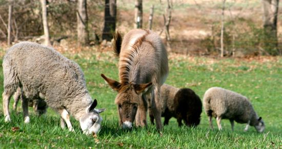 What to Think About Before You Go Out and Buy Sheep